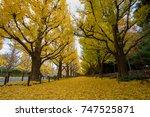 The Ginkgo Biloba Tree  Yellow...