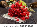 a bunch of red viburnum on a... | Shutterstock . vector #747535249