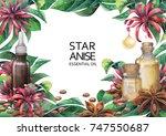 watercolor star anise plants...   Shutterstock . vector #747550687