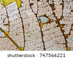 Small photo of Natural variability autumn linden leaf texture skeleton pattern organic aging process, macro view photography.