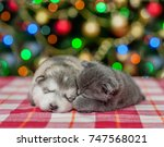 Stock photo sleeping puppy and kitten on a background of the christmas tree 747568021