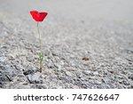 A Single Red Poppy Flower...