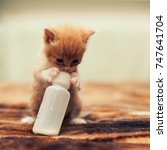 Stock photo cute young baby red kitten feeding from a bottle 747641704