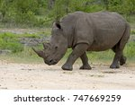 african white and black rhino | Shutterstock . vector #747669259