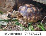 african spurred tortoise at... | Shutterstock . vector #747671125