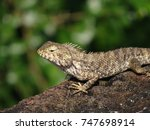 a lizard looking from an old... | Shutterstock . vector #747698914