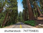 Driving through Avenue of the giants sequoia  in Sequoia National Park, California, USA. - stock photo