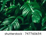 tropical jungle foliage  dark... | Shutterstock . vector #747760654