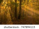 lovely autumn morning scenery... | Shutterstock . vector #747894115