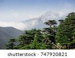 rare and endangered lebanese... | Shutterstock . vector #747920821