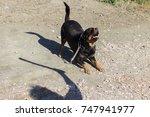 big rottweiler looking at a man ... | Shutterstock . vector #747941977