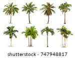 Coconut and palm trees isolated ...