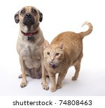 Stock photo this dog and cat get along long enough for a photo both have blank tags visible on their collars 74808463