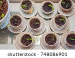 planting a pepper and a paprika ... | Shutterstock . vector #748086901