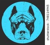 portrait of pit bull  hand... | Shutterstock .eps vector #748114945