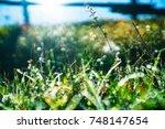 field of long green grass sway...   Shutterstock . vector #748147654