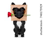 funny french bulldog dog in... | Shutterstock . vector #748175929