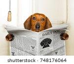 funny   sausage dachshund dog...   Shutterstock . vector #748176064
