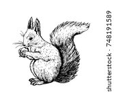 Hand Drawn Squirrel. Retro...