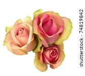 Stock photo beautiful roses isolated on white background 74819842