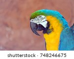 head of blue and yellow macaw ... | Shutterstock . vector #748246675