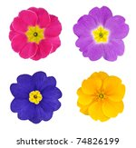 Stock photo four colorful primroses flowers isolated on white background 74826199