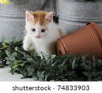 Stock photo an adorable white and tan kitten playing among ivy and garden supplies 74833903