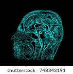 topographic map mri of the... | Shutterstock . vector #748343191
