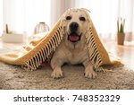 beautiful labrador retriever... | Shutterstock . vector #748352329