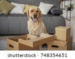 glad animal companion locating... | Shutterstock . vector #748354651