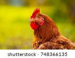 look of strong cock | Shutterstock . vector #748366135