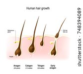 hair growth. anagen is the... | Shutterstock .eps vector #748394089
