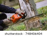 Cutting tree with a chainsaw - stock photo