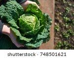 fresh savoy cabbage   brassica... | Shutterstock . vector #748501621