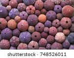 Background Of Red Sea Urchin...