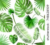 tropical green palm leaf... | Shutterstock . vector #748628509