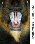 close up portrait of baboon... | Shutterstock . vector #74863732