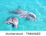 Dolphins Couple Swimming In...