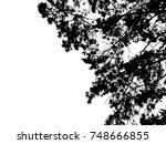 oak branch | Shutterstock . vector #748666855