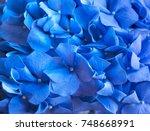 blue hydrangea background....   Shutterstock . vector #748668991
