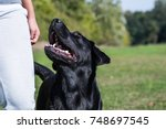 a woman with dog in the park. | Shutterstock . vector #748697545