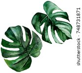 tropical hawaii leaves in a... | Shutterstock . vector #748731871