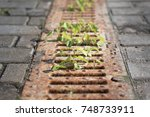 Green Weeds Growing Through A...