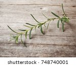 rosemary | Shutterstock . vector #748740001