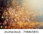 fireworks at new year and copy... | Shutterstock . vector #748865851