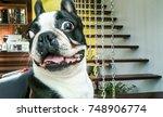 dog breed   french bulldog  ...   Shutterstock . vector #748906774