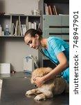 veterinarian or doctor with... | Shutterstock . vector #748947901