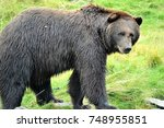 grizzly bear | Shutterstock . vector #748955851