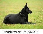 beautiful black german shepherd ... | Shutterstock . vector #748968511