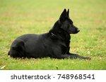 beautiful black german shepherd ... | Shutterstock . vector #748968541